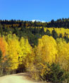 Fall in Colorado - Aspens from Gold Camp Road